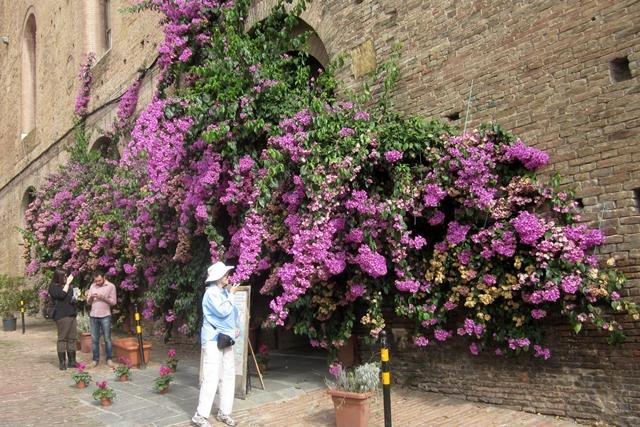 1100 Siena Flowers
