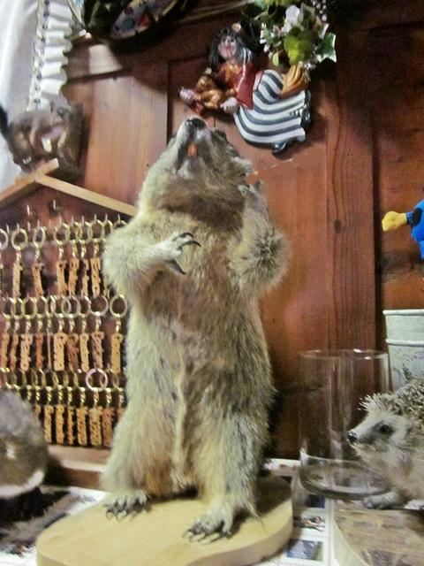 4000 Dolomite Marmot