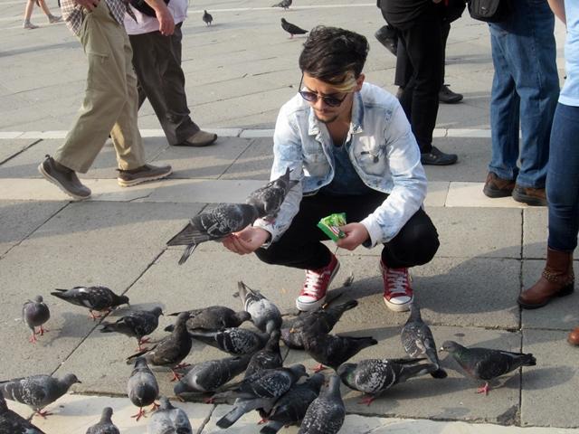 4325 Venice Pidgeons