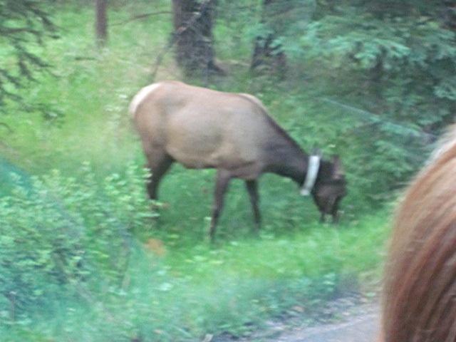 5013 Elk